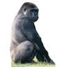 Gorilla Cardboard Cutout 220