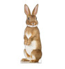 This is a life-size cardboard standee of a Bunny Rabbit.