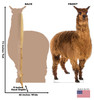 Life-size cardboard standee of a Llama Front and Back View
