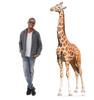 Life-size Giraffe Cardboard Standup   Cardboard Cutout with model.