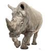 Life-size White Rhinoceros Cardboard Standup| Cardboard Cutout
