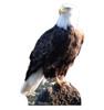 Life-size Bald Eagle Cardboard Standup   Cardboard Cutout