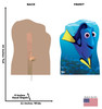 Life-size cardboard standee of Dori with back and front dimensions.