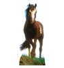 Life-size Mustang Horse Cardboard Standup