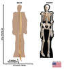 Life-size The Skeleton Cardboard Standup with Front and Back Dimensions.