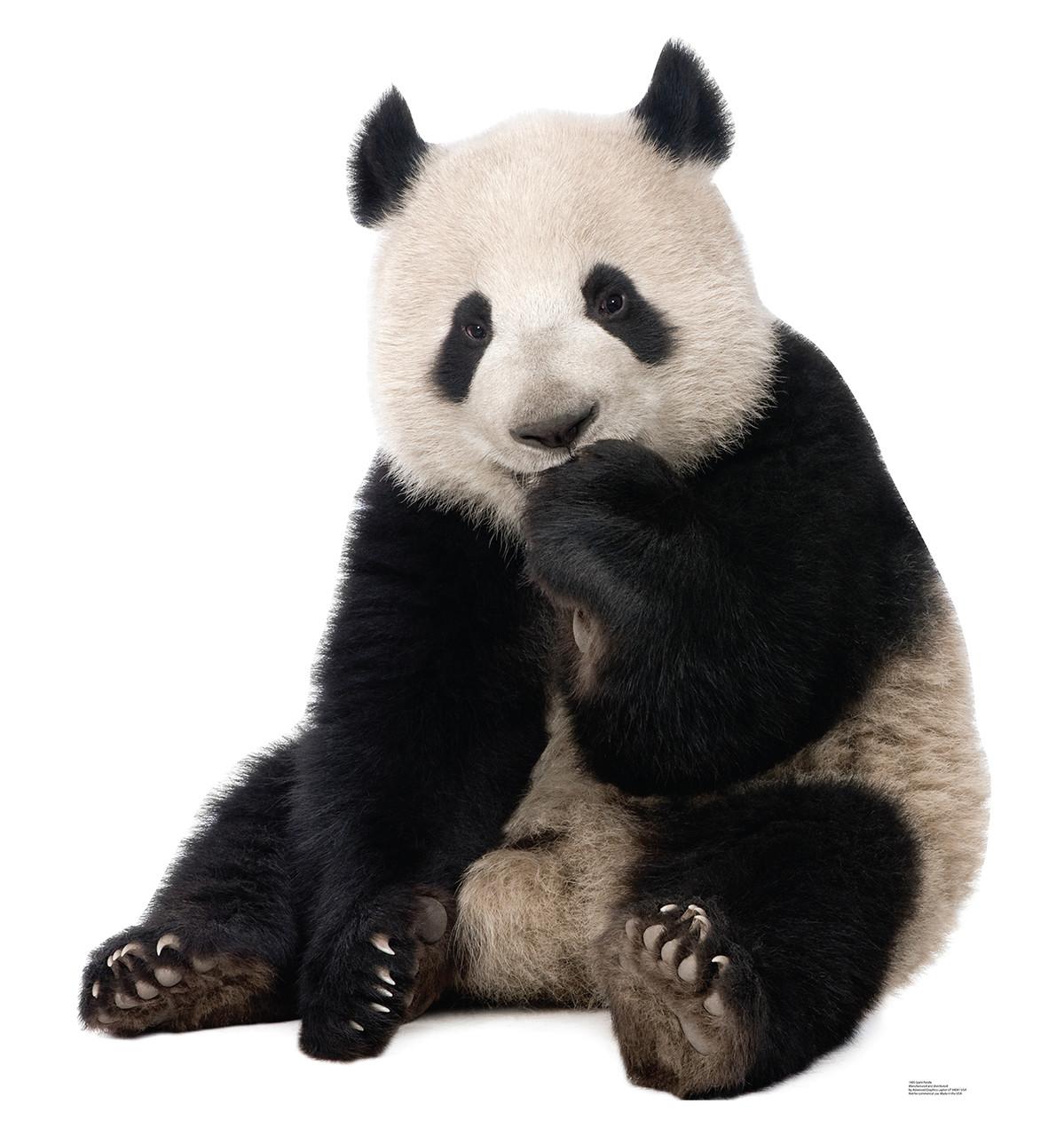 Life-size Giant Panda Cardboard Standup