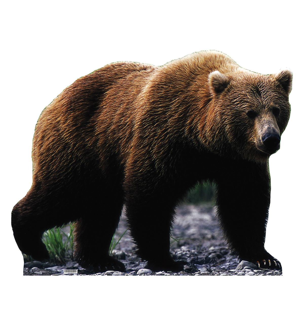 Life-size Grizzly Bear Cardboard Standup   Cardboard Cutout