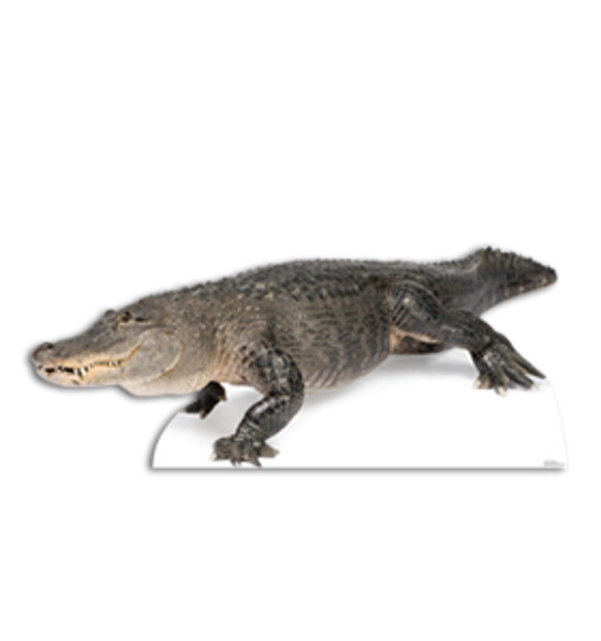 Life-size American Alligator Cardboard Standup | Cardboard Cutout 2