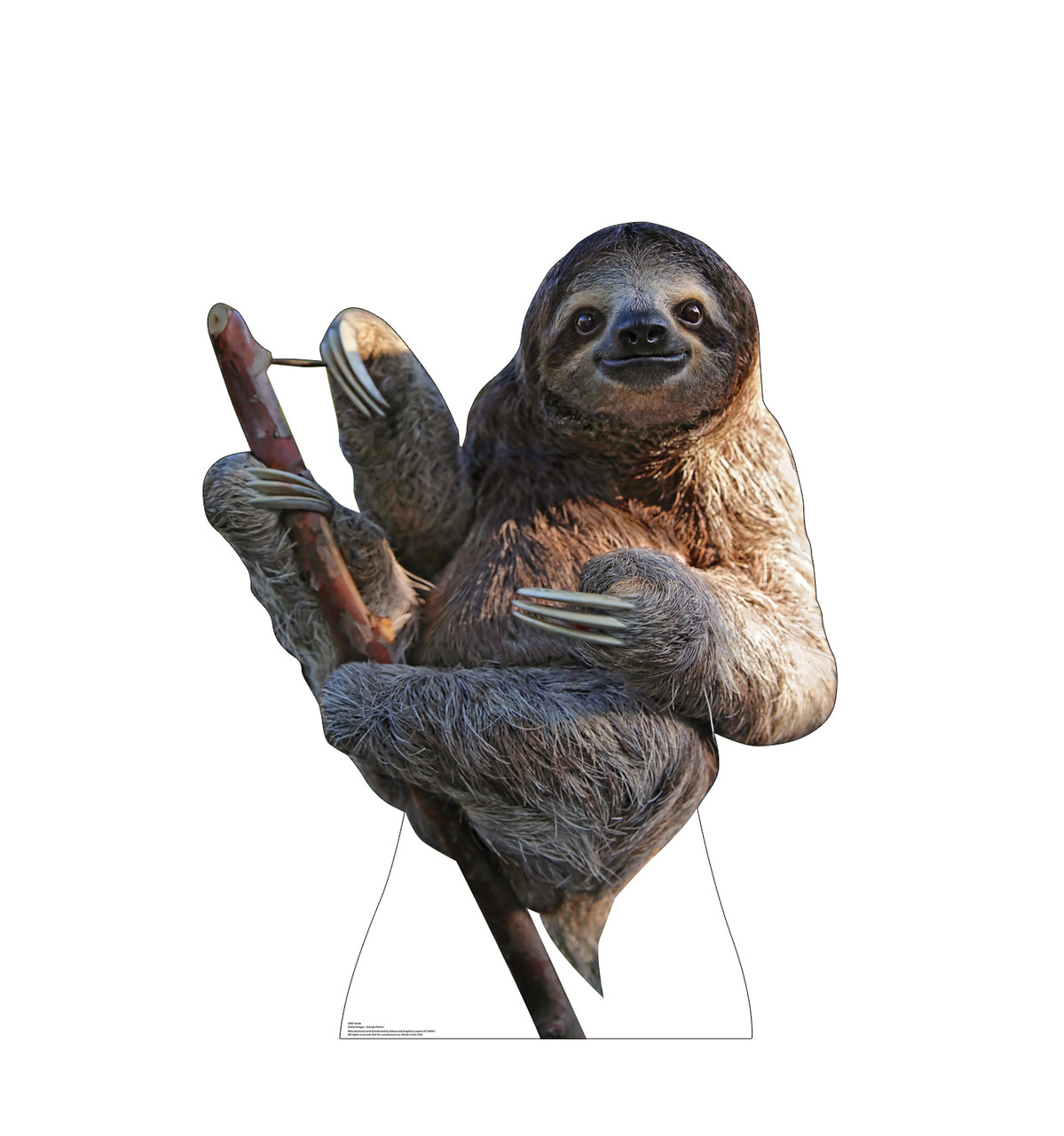 Life-size cardboard standee of a Sloth Front View