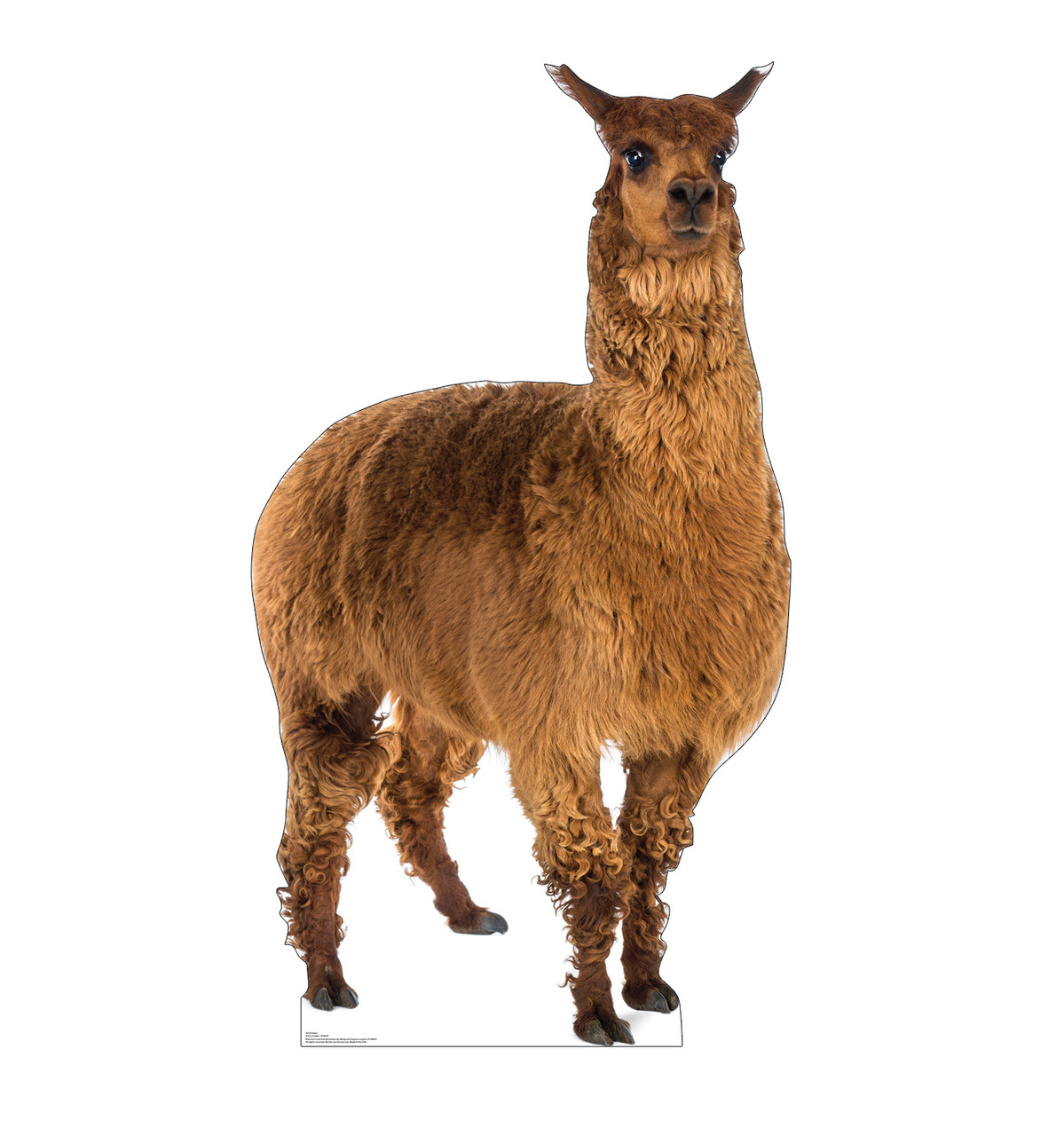 Life-size cardboard standee of a Llama Front View