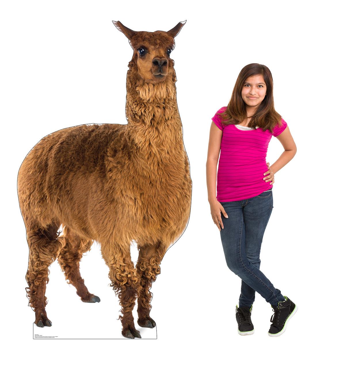 Life-size cardboard standee of a Llama Lifesize
