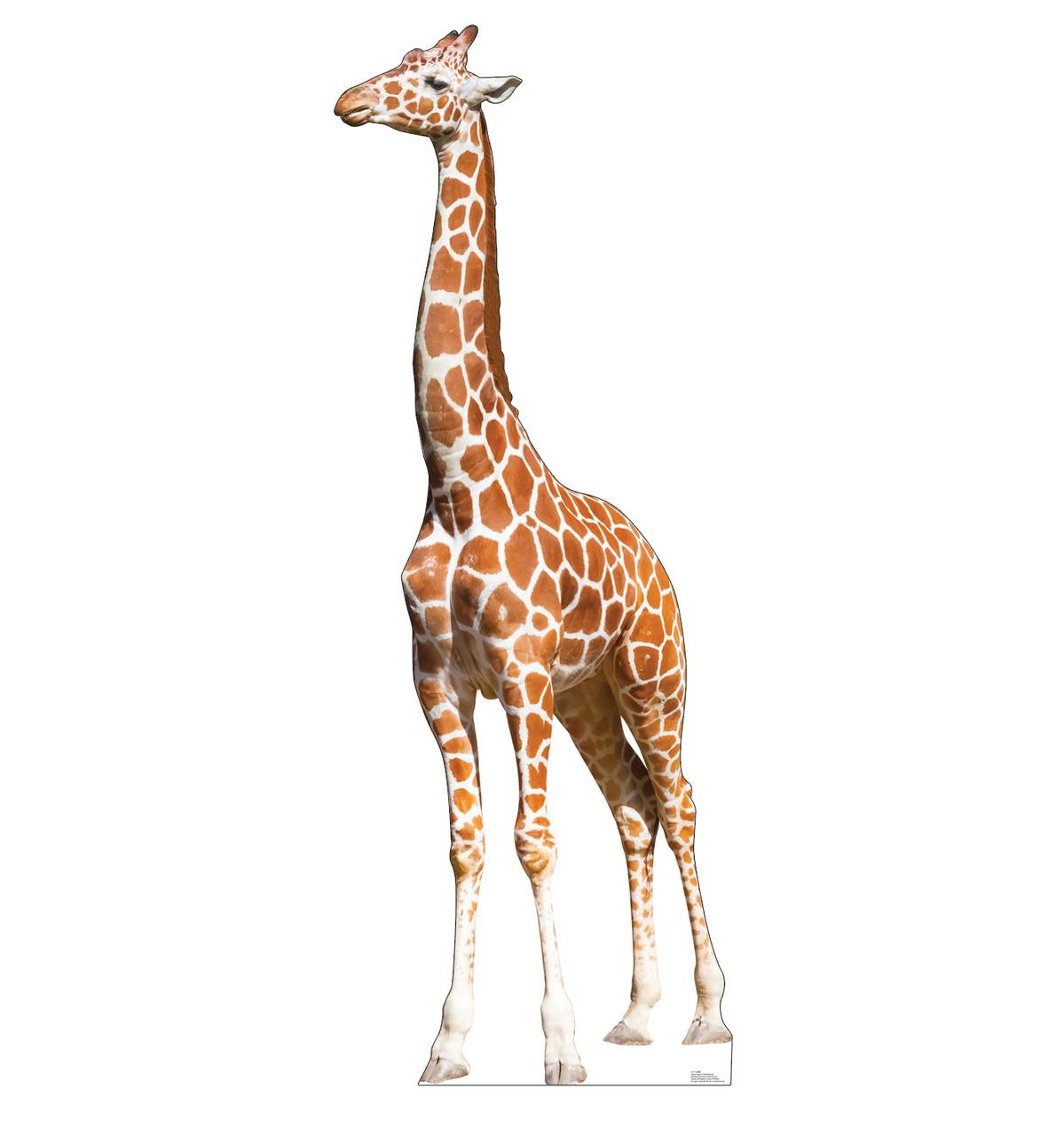 Life-size Giraffe Cardboard Standup   Cardboard Cutout.