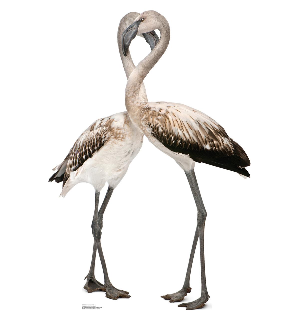 Life-size Flamingos - Love Birds Cardboard Standup   Cardboard Cutout