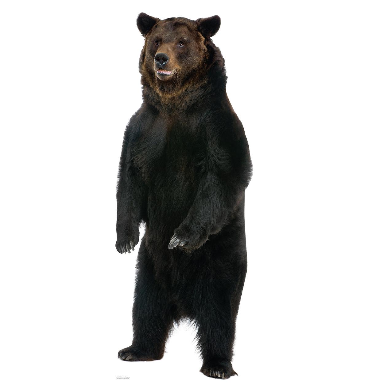 Brown Bear Talking - Cardboard Cutout