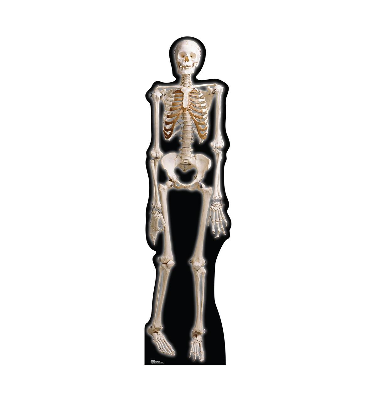 Life-size The Skeleton Cardboard Standup.