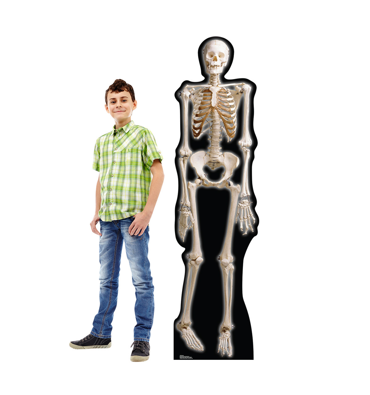 Life-size The Skeleton Cardboard Standup with Model.