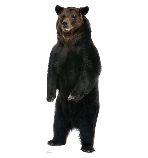 Brown Bear Cardboard Cutout