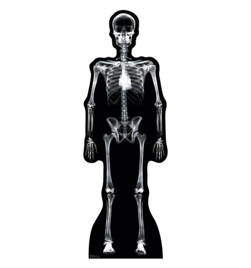 Life-size X-Ray Skeleton Cardboard Standup