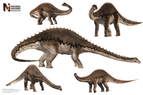 """Diplodocus Layout - 36"""" x 24"""" WJ WJ1035"""