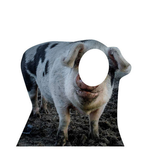 Pig Stand-In 2292