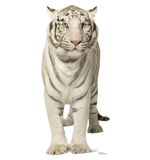 Life-size White Tiger Cardboard Standup |Cardboard Cutout