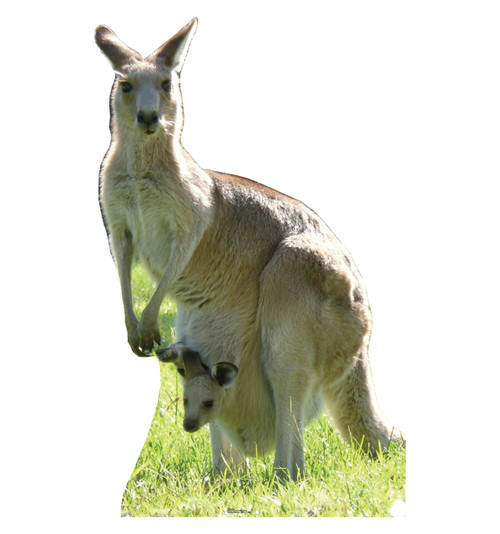 Life-size Kangaroo Cardboard Standup