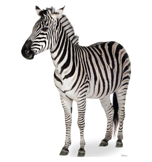 Life-size Zebra side Cardboard Standup
