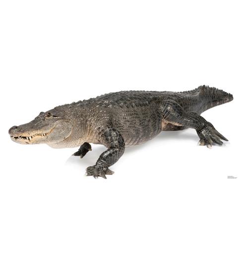 Life-size American Alligator Cardboard Standup | Cardboard Cutout