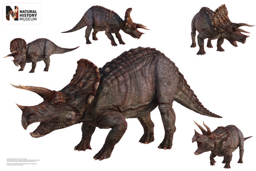 Triceratops Group