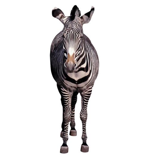 Zebra - Cardboard Cutout