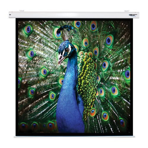 """HamiltonBuhl 99"""" Diag. (70x70) Electric Projector Screen, Square Format, with Matte White Fabric"""