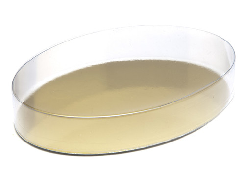Small Oval Transparent Base and Lid - Transparent Range - Clear Packaging (food grade transparent plastic) | MeridianSP