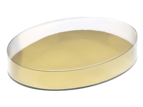 Medium Oval Transparent Base and Lid - Transparent Range - Clear Packaging (food grade transparent plastic) | MeridianSP