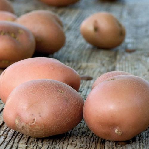Kerr's Pink Potato Seeds