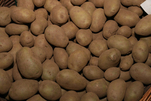 Pentland Crown Potato
