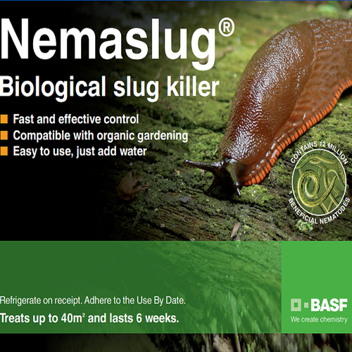 best way to kill garden pests