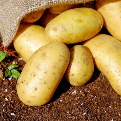 Pentland Dell Potato Seeds