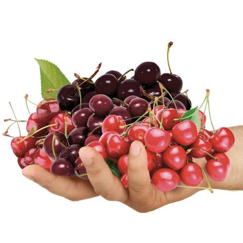 Family Cherry Tree 5 Varieties