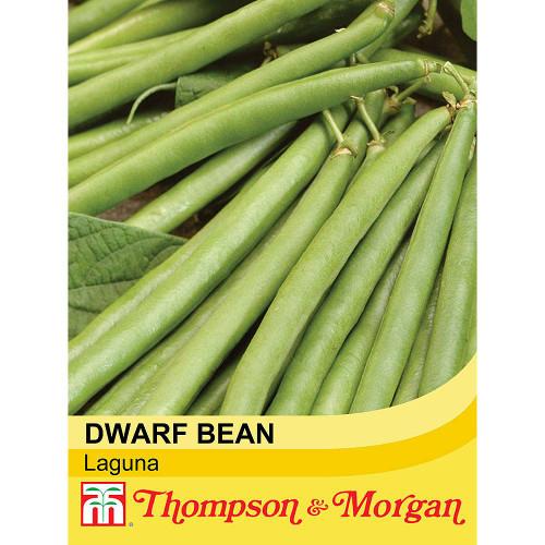 Dwarf Bean 'Laguna'