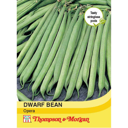 Dwarf Bean 'Opera'