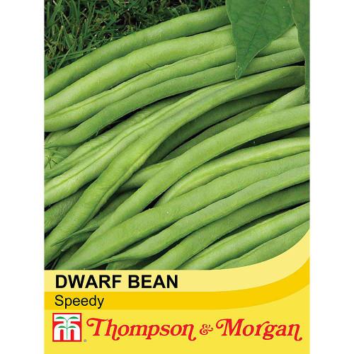Dwarf Bean 'Speedy'
