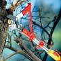 Wolf Anvil Tree Lopper