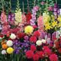 100 Sensational Summer Bulbs