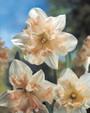 spring bulbs in ireland