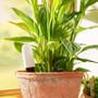 Grow Care Probe
