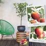 Duo Patio Apple Tree