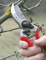 Felco Secateurs