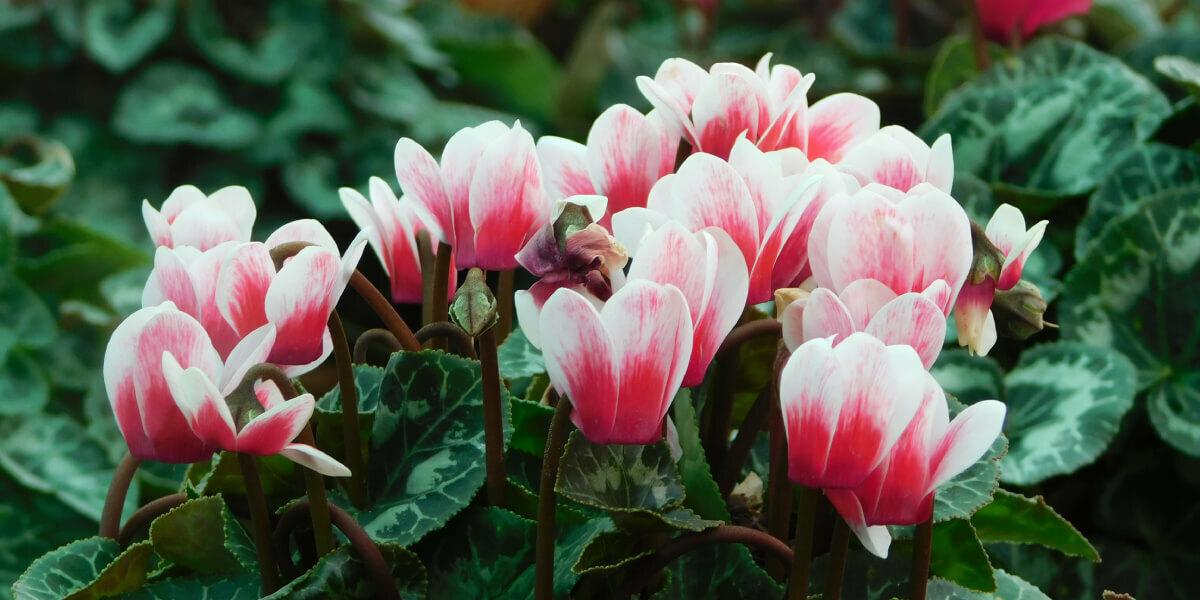 Woodland Bulbs