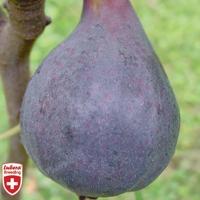 Lubera Fruits