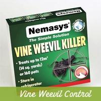 Vine Weevil Control